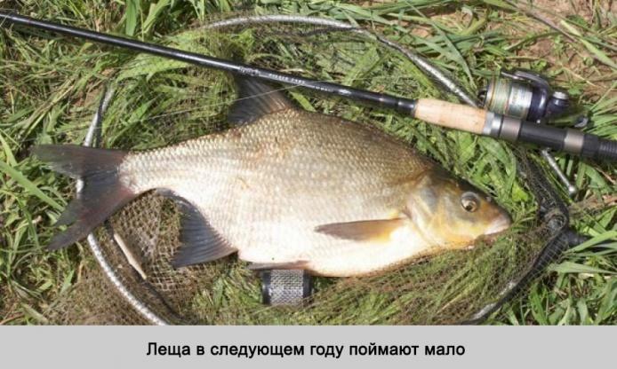 какую рыбу ловят осенью на реке